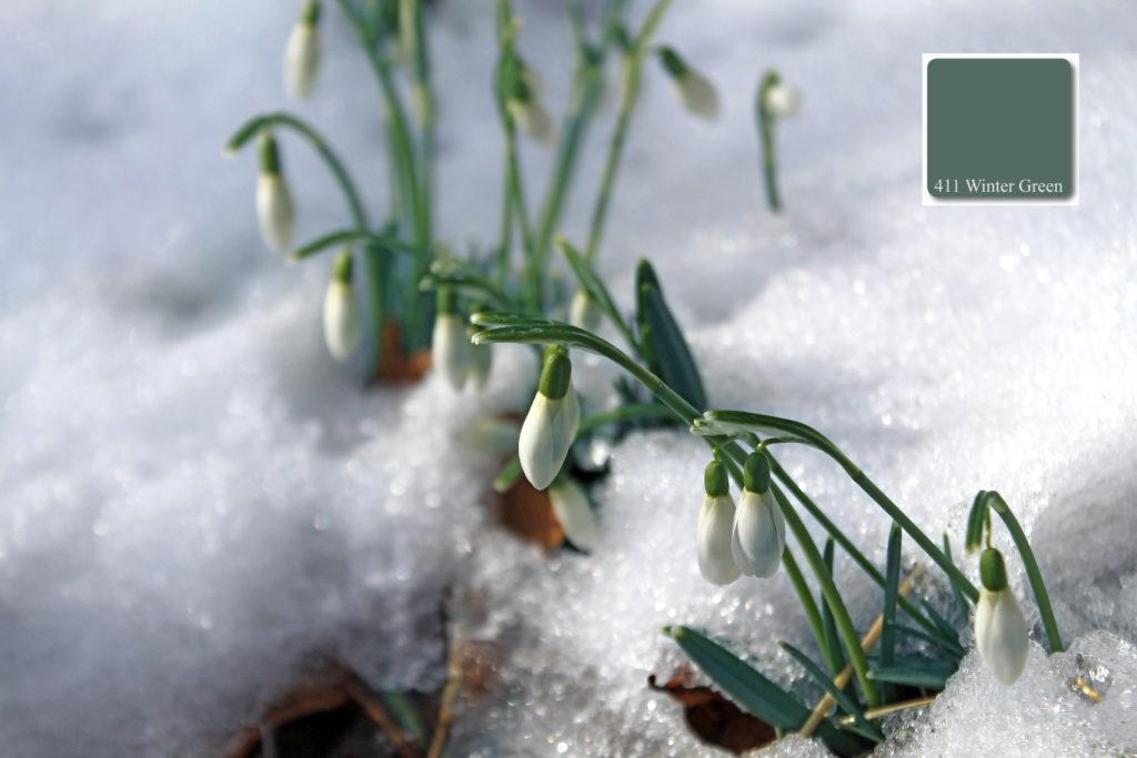 411_Winter_Green_Label