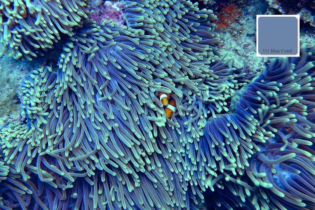 apprico-colours_blue_coral_