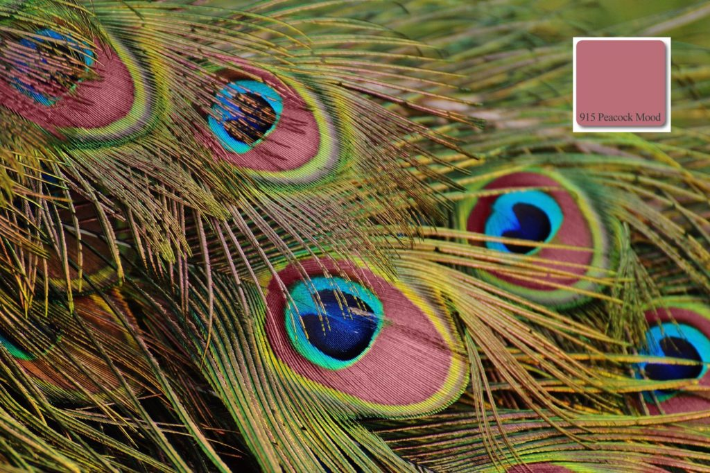 apprico Colours_Peacock_Mood