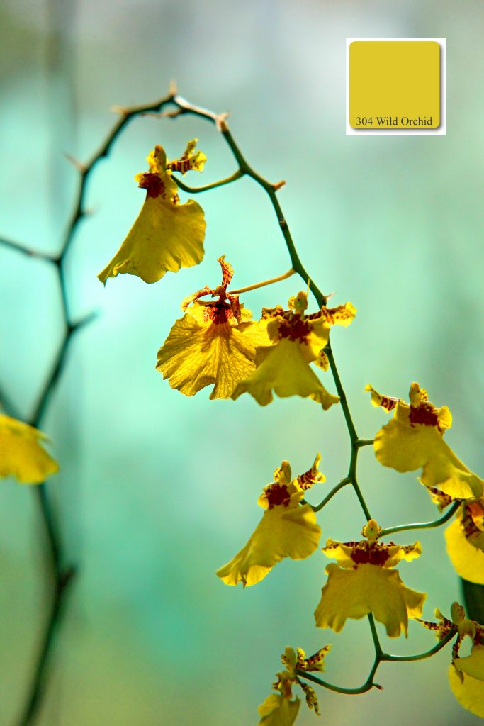 appricoColours Wild_Orchid