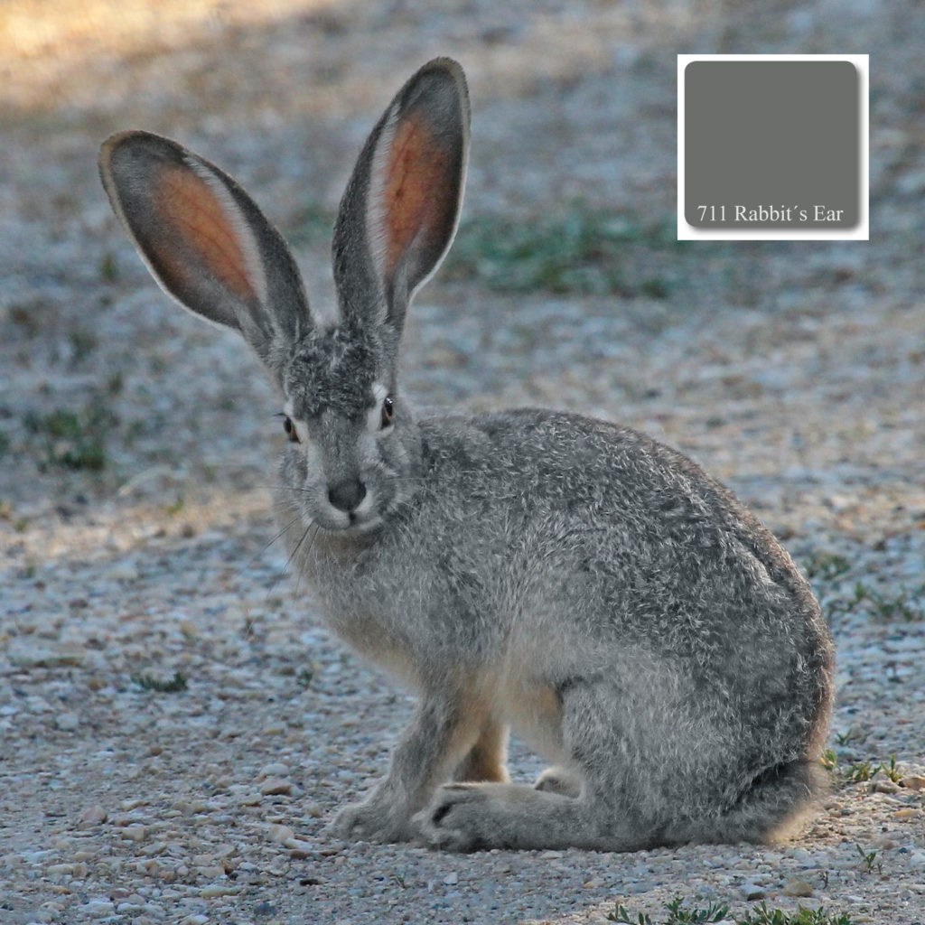 apprico_colours_rabbits_ear