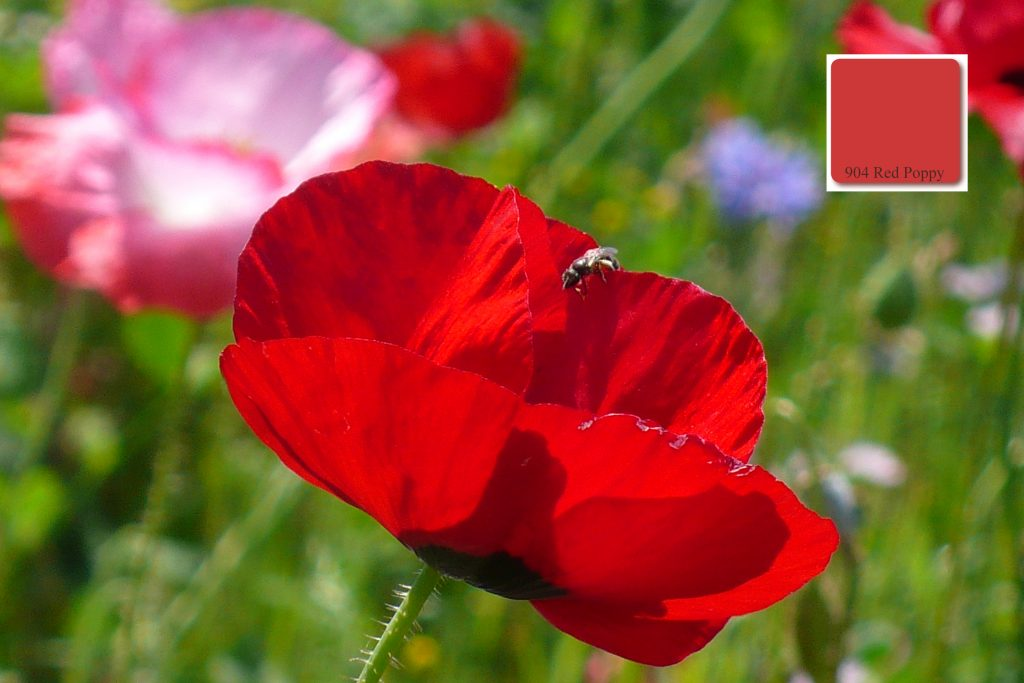apprico_Colours_Red_Poppy